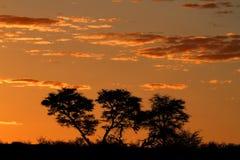 Αφρικανικό ηλιοβασίλεμα με τα σκιαγραφημένα δέντρα Στοκ φωτογραφία με δικαίωμα ελεύθερης χρήσης