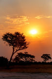 Αφρικανικό ηλιοβασίλεμα με το δέντρο στο μέτωπο Στοκ φωτογραφία με δικαίωμα ελεύθερης χρήσης