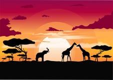 Αφρικανικό ηλιοβασίλεμα στη σαβάνα με τη σκιαγραφία των ζώων Στοκ φωτογραφίες με δικαίωμα ελεύθερης χρήσης