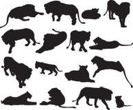 Αφρικανικό λιοντάρι και ασιατικό περίγραμμα σκιαγραφιών λιονταριών Στοκ εικόνες με δικαίωμα ελεύθερης χρήσης