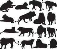 Αφρικανικό λιοντάρι και ασιατικό περίγραμμα σκιαγραφιών λιονταριών Στοκ Εικόνα