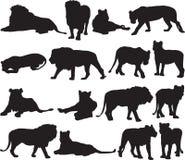Αφρικανικό λιοντάρι και ασιατικό περίγραμμα σκιαγραφιών λιονταριών διανυσματική απεικόνιση