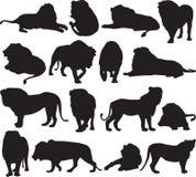 Αφρικανικό λιοντάρι και ασιατικό περίγραμμα σκιαγραφιών λιονταριών Στοκ εικόνα με δικαίωμα ελεύθερης χρήσης