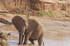 αφρικανικό κενυατικό riverbank &epsilon Στοκ εικόνα με δικαίωμα ελεύθερης χρήσης