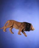 Αφρικανικό παιχνίδι λιονταριών που απομονώνεται στο μπλε Στοκ Φωτογραφία