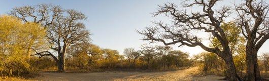 Αφρικανικό πανόραμα τοπίων Στοκ φωτογραφία με δικαίωμα ελεύθερης χρήσης