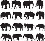 Αφρικανικό περίγραμμα σκιαγραφιών ελεφάντων Στοκ Εικόνα