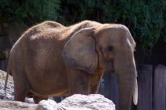 αφρικανικό πορτρέτο ελεφάντων Στοκ φωτογραφία με δικαίωμα ελεύθερης χρήσης