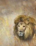 αφρικανικό πορτρέτο λιονταριών Στοκ εικόνες με δικαίωμα ελεύθερης χρήσης