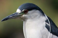 αφρικανικό πουλί Στοκ Φωτογραφίες