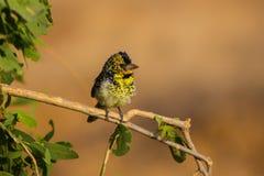 αφρικανικό πουλί Στοκ φωτογραφία με δικαίωμα ελεύθερης χρήσης