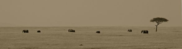 αφρικανικό τοπίο ελεφάντ&ome Στοκ εικόνες με δικαίωμα ελεύθερης χρήσης