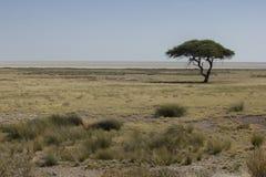 Αφρικανικό τοπίο, Ναμίμπια Στοκ Εικόνες