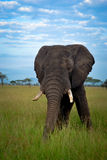 Αφρικανικό τοπίο σαβανών, Τανζανία Αφρική Στοκ φωτογραφία με δικαίωμα ελεύθερης χρήσης