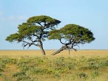 αφρικανικό τοπίο Στοκ εικόνα με δικαίωμα ελεύθερης χρήσης