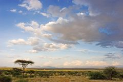 αφρικανικό τοπίο Στοκ φωτογραφίες με δικαίωμα ελεύθερης χρήσης