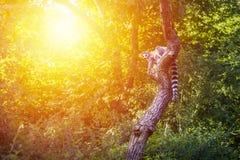 Αφρικανικό υπόβαθρο άγριας φύσης ζώων Στοκ φωτογραφία με δικαίωμα ελεύθερης χρήσης