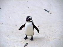 Αφρικανικό penguin στην παραλία Στοκ εικόνα με δικαίωμα ελεύθερης χρήσης