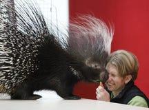 αφρικανικό porcupine Στοκ Φωτογραφίες