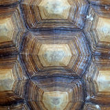 Αφρικανός κέντρισε ή κοχύλι sulcata geochelone Στοκ φωτογραφία με δικαίωμα ελεύθερης χρήσης