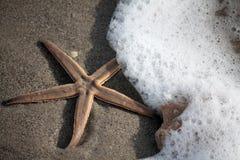 Αφρός αστεριών και θάλασσας Στοκ Φωτογραφίες