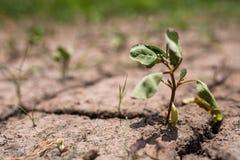 Αφυδατωμένο μικρό δέντρο με το ξηρό χώμα Στοκ φωτογραφία με δικαίωμα ελεύθερης χρήσης