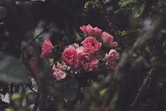Αφότου βρίσκεται η αγωνία ομορφιά και αγάπη Στοκ φωτογραφίες με δικαίωμα ελεύθερης χρήσης