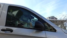 Αφύλακτο μικρό σκυλί που αποφλοιώνει το εσωτερικό όχημα απόθεμα βίντεο