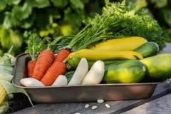 λαχανικά κήπων Στοκ εικόνα με δικαίωμα ελεύθερης χρήσης