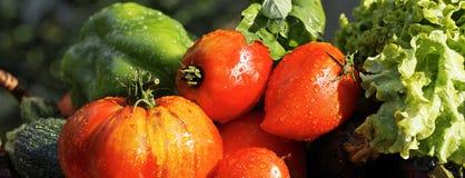 λαχανικά υγρά Στοκ φωτογραφία με δικαίωμα ελεύθερης χρήσης