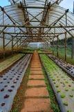 λαχανικό κήπων Στοκ Φωτογραφίες