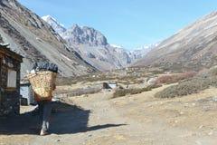 Αχθοφόρος Nepali στοκ εικόνες