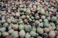 αχλάδια σάπια Στοκ εικόνα με δικαίωμα ελεύθερης χρήσης