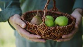 Αχλάδια στο καλάθι απόθεμα βίντεο
