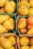 Αχλάδια του Ουίλιαμς γνωστά επίσης ως Bartlett αχλάδια στοκ φωτογραφίες με δικαίωμα ελεύθερης χρήσης