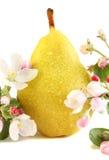αχλάδι λουλουδιών Στοκ Εικόνα