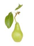 αχλάδι καρπού Στοκ φωτογραφία με δικαίωμα ελεύθερης χρήσης