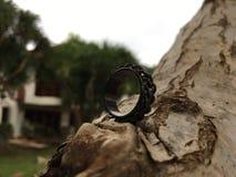 δαχτυλίδι Στοκ Φωτογραφίες