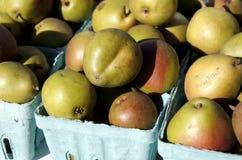 Αχλάδια Seckel στοκ εικόνα με δικαίωμα ελεύθερης χρήσης