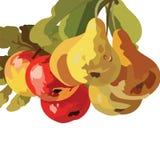 Αχλάδια Watercolor και φρούτα της Apple που απομονώνονται Στοκ Φωτογραφία