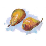 Αχλάδια Watercolor με το χρωματισμένο σημείο Στοκ Εικόνα