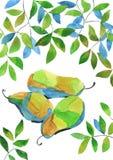 Αχλάδια Watercolour Στοκ εικόνα με δικαίωμα ελεύθερης χρήσης