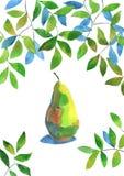 Αχλάδι Watercolour Στοκ Εικόνες