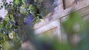 Αψίδα με τα λουλούδια, όμορφο ξύλινο photozone απόθεμα βίντεο