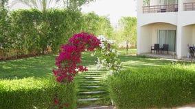 Αψίδα του bougainvillaea λουλουδιών απόθεμα βίντεο