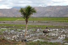 Αϊτή στοκ φωτογραφίες