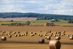 Αύγουστος στα της Λευκορωσίας τομέας-δημητριακά ήταν ήδη αφαιρεί στοκ φωτογραφίες με δικαίωμα ελεύθερης χρήσης