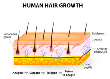 Αύξηση ανθρώπινα μαλλιών Στοκ εικόνες με δικαίωμα ελεύθερης χρήσης