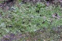 Αύξηση βρύου λειχήνων στην πέτρα στο δάσος Στοκ φωτογραφία με δικαίωμα ελεύθερης χρήσης
