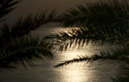 Αύξηση πανσελήνων Στοκ φωτογραφίες με δικαίωμα ελεύθερης χρήσης
